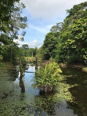 Boca Tapada, Коста-Рика: IMG-20180516-WA0032_large.jpg