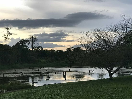Boca Tapada, Коста-Рика: IMG-20180517-WA0020_large.jpg