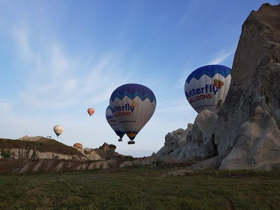 Butterfly Balloons: 20180508_061538_large.jpg