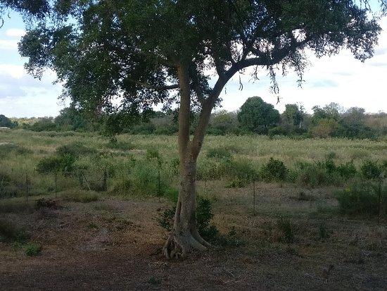Skukuza, Güney Afrika: IMG_20180517_144024_large.jpg