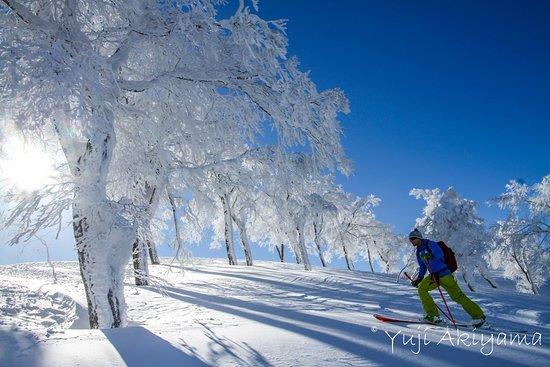 Canadian Rockies Mountain Guides: Ski Touring in Hakuba, Japan.  January 2016.  Photo: Yuji Akiyama