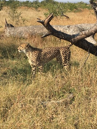 Singita Private Game Reserve, South Africa: leopard in the bush