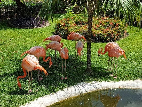 Flamingo near Lobby area