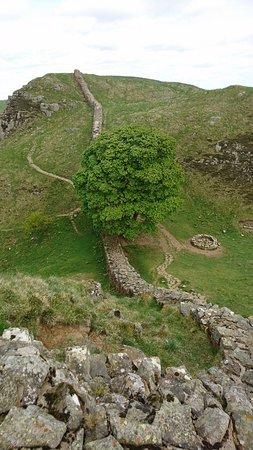 Northumberland National Park, UK: DSC_2876_large.jpg