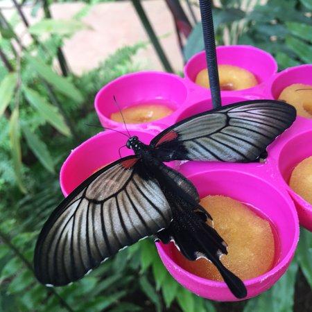 Butterfly Park of Benalmadena Φωτογραφία