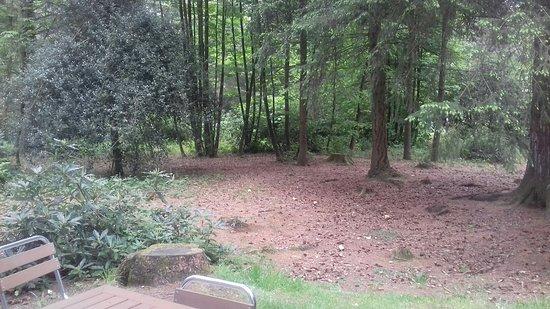 Center Parcs Longleat Forest: 20180516_114420_large.jpg