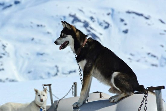 Alpine Air Alaska: Glacier Camp