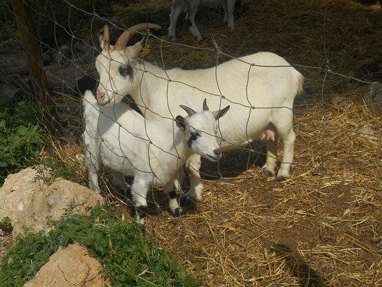 Bunyola, Spain: Aandacht voor dieren