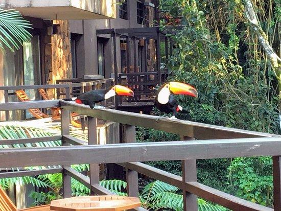 Loi Suites Iguazu Hotel: Tucanos na varanda