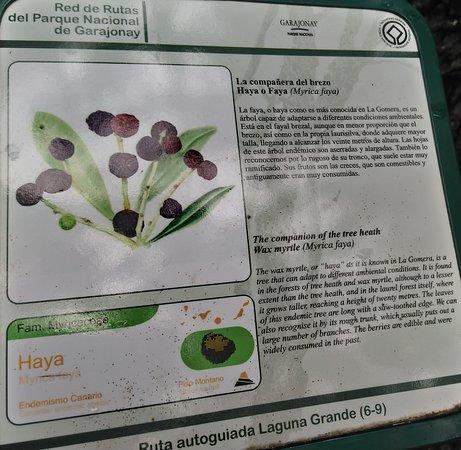 Parque Nacional del Garajonay: Všude jsou informační tabule