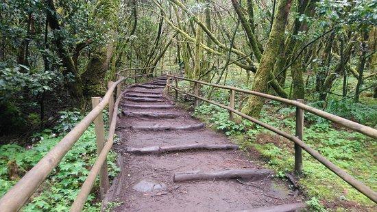 Parque Nacional del Garajonay: Procházku v pralese zvládnou i fyzicky nepříliš zdatní návštěvníci