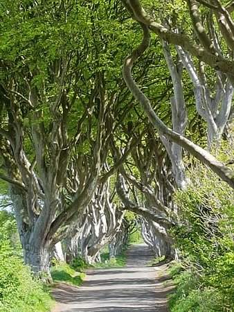 Game of Thrones Tours: The Dark Hedges