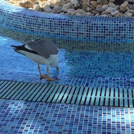 Bilde fra Muthu Clube Praia da Oura
