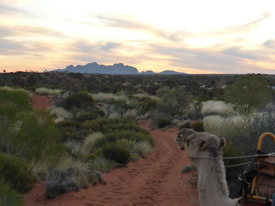 Uluru Camel Express, Sunrise or Sunset Tours: Sunset on Kata Tjuta