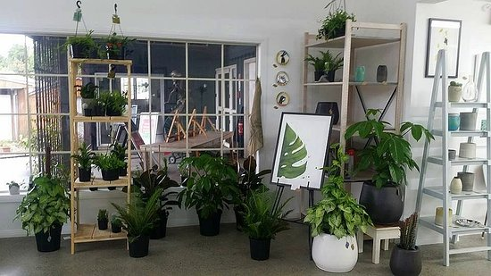 Deciduus - fine art and plant boutique