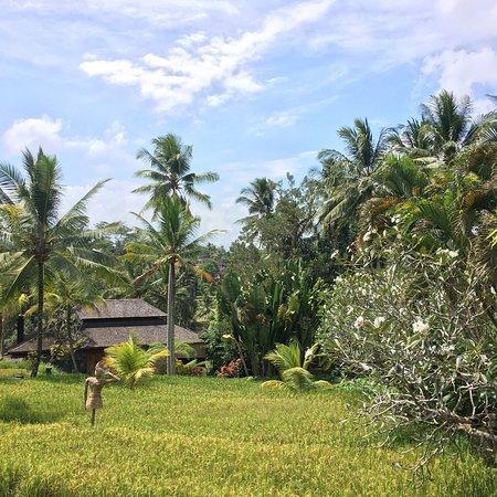 Chapung SeBali Resort and Spa: photo1.jpg