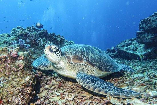 3W Dive Gili Air Φωτογραφία