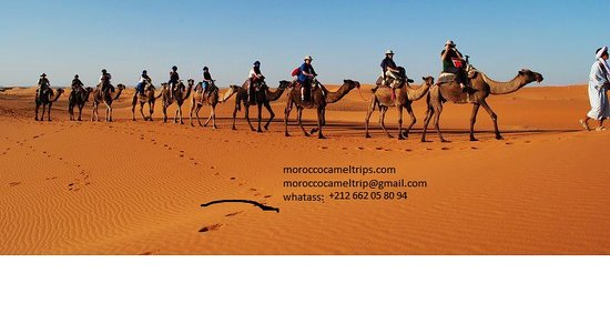 ‪Morocco Camel Trips - Day Trips‬
