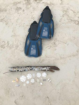 Coco Plum Beach : Best shelling beach