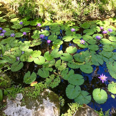 McKee Botanical Garden: photo0.jpg