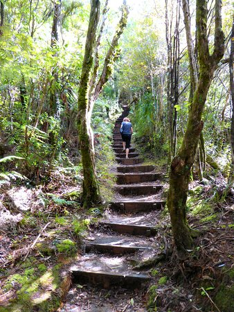 Warkworth, New Zealand: Starting the 'Dome Forest Walkway' climb