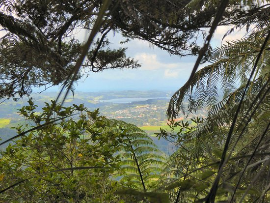 Warkworth, New Zealand: Dome Forest Walkway views are few and not so good