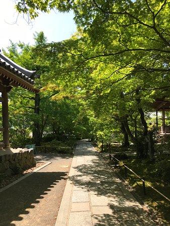 Jojakkoji Temple: 常寂光寺