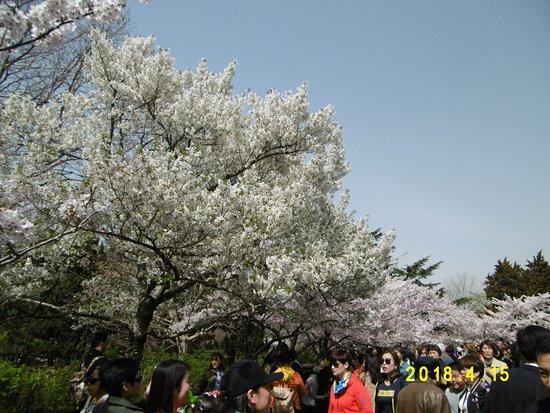 Qingdao Zhongshan Park: 人であふれています