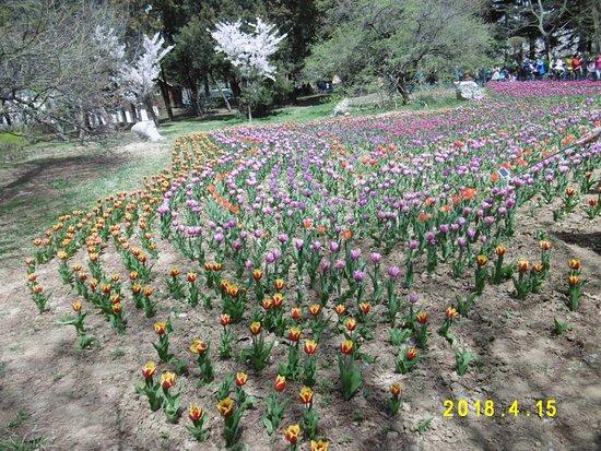 Qingdao Zhongshan Park: ちょっとまばらですが