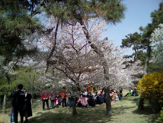 Qingdao Zhongshan Park: 花の下に人が集まっていましたが、宴会ではありません