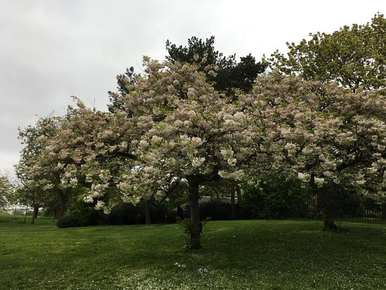 Κήποι του Κένσινγκτον: 花もきれいに咲いていました。天気がよければもっときれい!