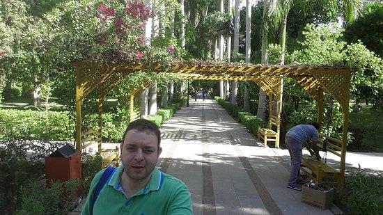 Aswan Governorate, Egypt: جزىره النباتات تضم أفضل واندر أنواع النباتات في العالم