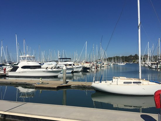 Marina - Picture of Manly Harbour Village, Brisbane