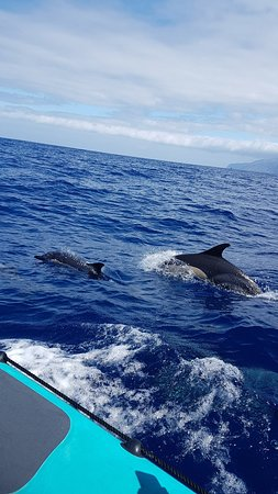Whale and Dolphin Watching in Madeira Island Φωτογραφία
