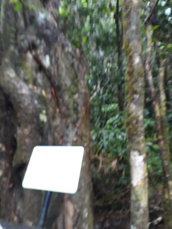 Daintree Rainforest, Cape Tribulation and Rainforest Habitat Wildlife Sanctuary Day Tour Resmi