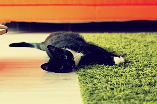 Bolshe  Shersti!: Фрося: когда лень двигаться - ляг и лежи!