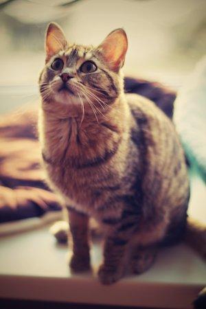 Bolshe  Shersti!: Эдит: ласковая и милая кошка будет счастлива играть!