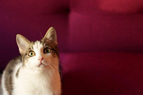 "Bolshe  Shersti!: ""Больше Шерсти!"": приходи к котам! коты ждут!"