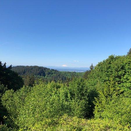 Forest Park Φωτογραφία