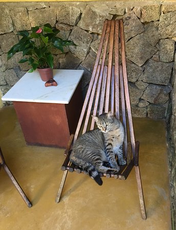 Pousada Cachoeira: Cats on the patio