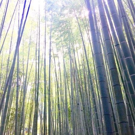 Kamakura Half-Day Walking Tour with Kotokuin (Great Buddha) Φωτογραφία