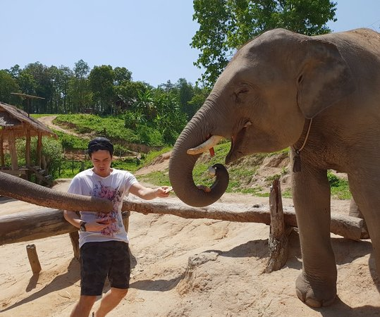 Elephant Care & Grand Canyon Jumping Resmi