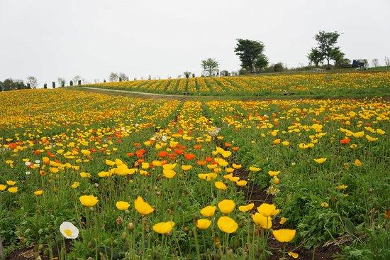 Nasu Flower World: 北海道を思わせる花畑