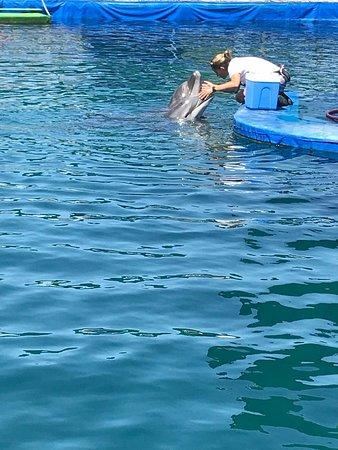 DolphinPark Marmaris: IMG-20180514-WA0001_large.jpg