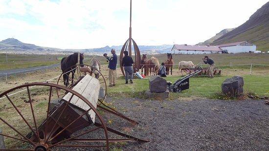 West Region, ไอซ์แลนด์: In The Farm