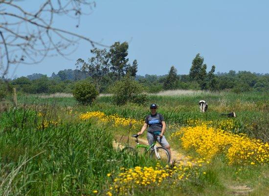 Estarreja, Portugal: O percurso de Bocage esta bem cuidado e de fácil acesso