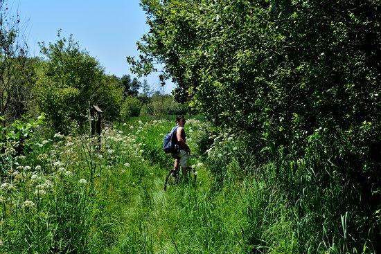Estarreja, Portugal: O mato é bem mais alto neste percurso, mas existem as placas indicativas do caminho.