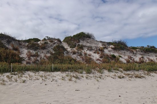 Hamelin Bay: The dunes