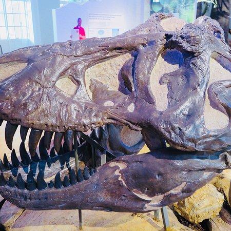Luonnontieteellinen museo: photo0.jpg