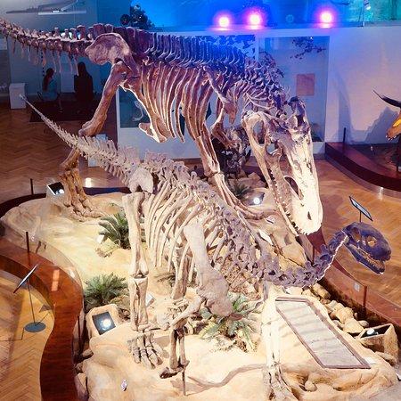 Luonnontieteellinen museo: photo1.jpg